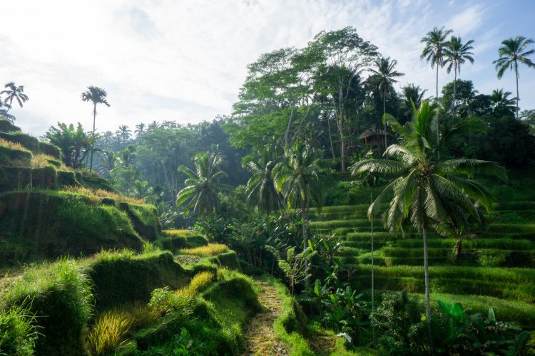 Orezarie Bali