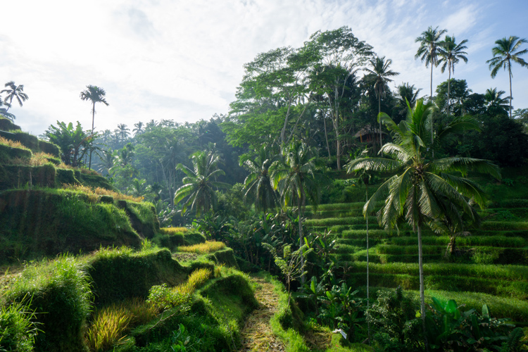 Tegallalang Rice Terrace Bali Travel Budget