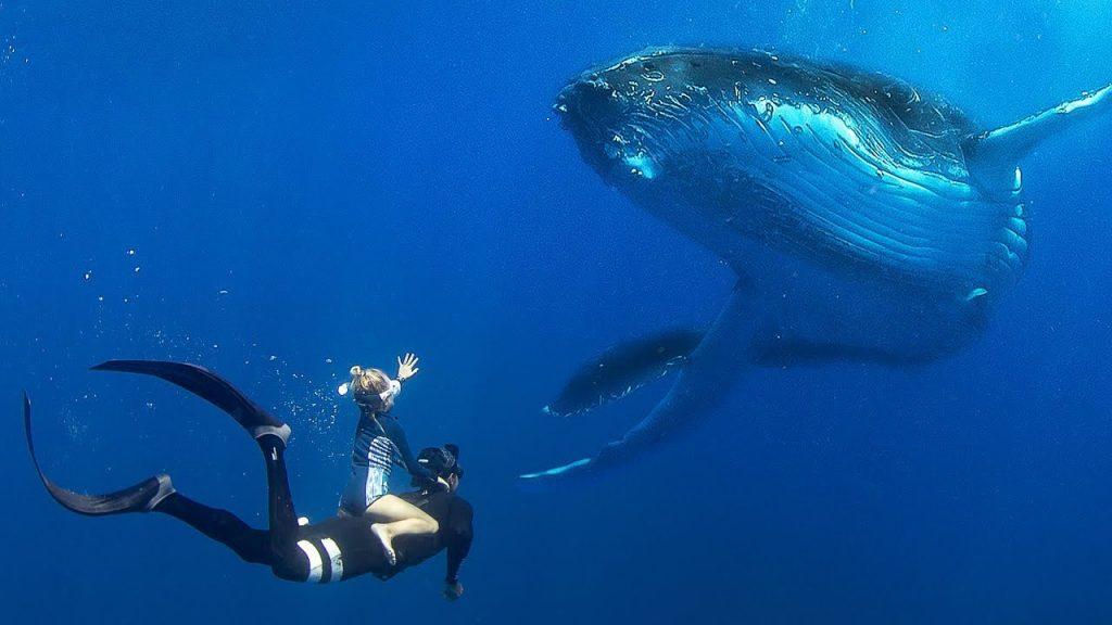 Inot cu balena cu cocoasa